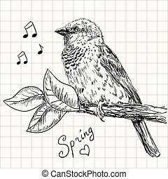 sparrow - Hand drawn sparrow bird sitting on a branch