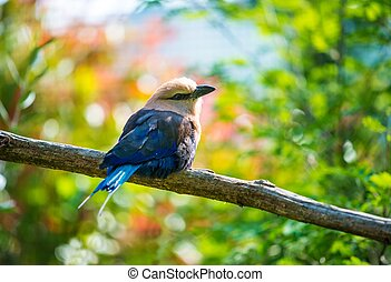 Beautiful little bird sitting on a tree branch