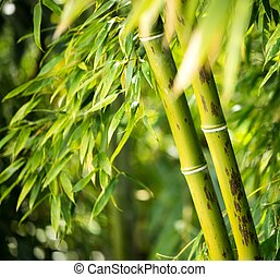 Close-up of a bamboo plant