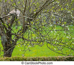 Two pigeons sitting on a tree branch