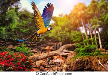 Picture of a tropical background - Beautiful Ara parrot on...
