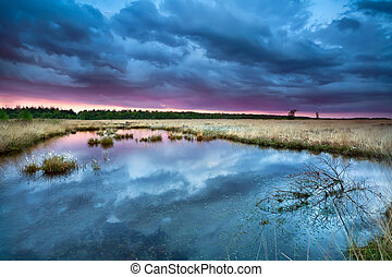swamp with flowering cottongrass at sunset, Drenthe,...