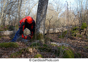 Forest work - Forestry worker with a chain saw