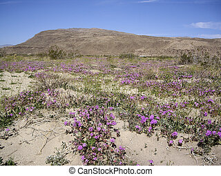 Desert Vista with wildflowers - Wildflowers bloom in the...