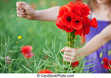 Girl with a bunch of red poppies - Hands of a young girl...