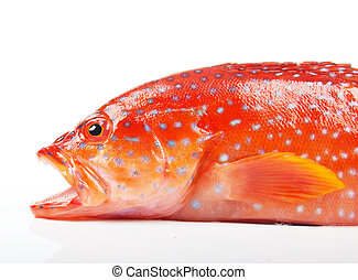 Red-banded grouper is a species of fish in the Serranidae...