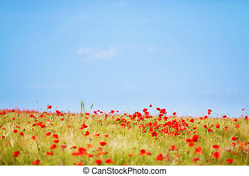 Fresh flower field - Landscape shot of beautiful flower...