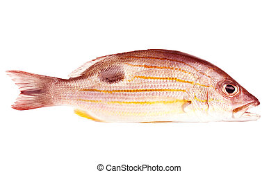 Russells snapper - Snappers are a family of perciform fish,...