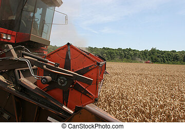 Combine harvesting wheat