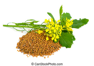 Mustard flowers and seed. On a white background.