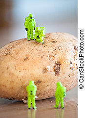 Group of Researchers in protective suit inspecting a potato....