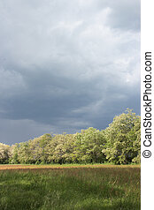 stormy clouds and wind over flowering acacia trees ,...