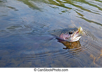 Landing Rainbow trout on fly - Landing Rainbow Trout - Trout...