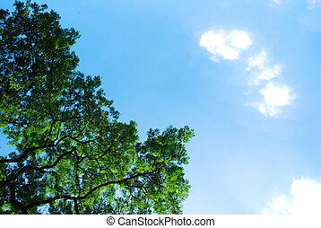 Bush and cloud on blue sky