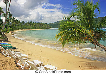 Leaning palm tree at Rincon beach, Samana peninsula,...