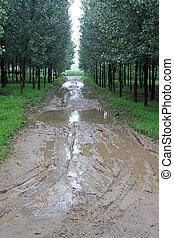 Muddy road in the woods, China - Luannan, August 2Muddy road...