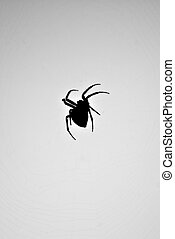 Spider Silhouette - A silhouette of a spider in its web....