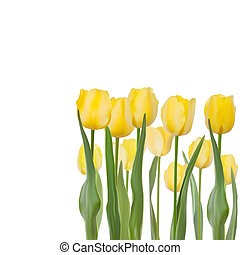 Tulips isolated on white background. EPS 8