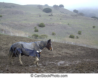 Horse in raincoat in the hills of San Jose, CA