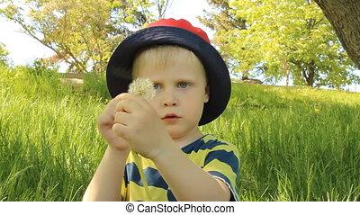Little boy on meadow with dandelion