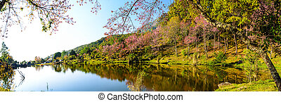 Panaorama of lake view with bloom pink flower on the...