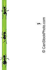 Ants. Vector.