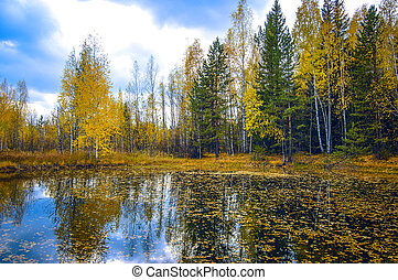 autumn trees reflected in the water
