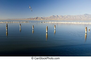 Salton Sea - Posts covered in salt in the lake know s the...