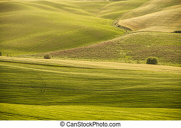 green field in Tuscany,Italy