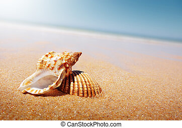 Seashell and Conch - A sea shell and a conch laying in the...