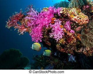 Soft Coral at Similan Thailand