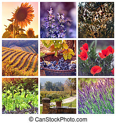 Colors of Provence, France - Provence Color Palettes:...