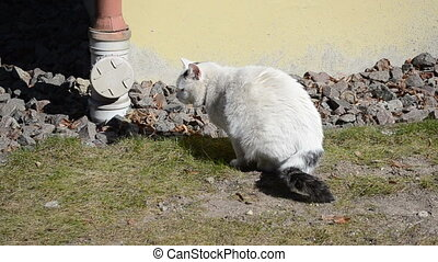 lazy cat on sun bath - white lazy cat take the sun