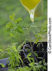 Potager-Plant de Tomate-Jardin - Potager-Plant de tomate...