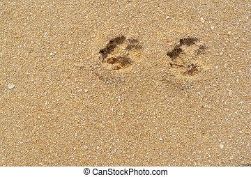 Dog footprints on the sandy beach.