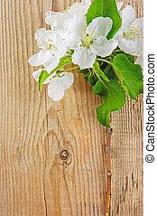 fából való, cseresznye, elágazik, háttér, madár