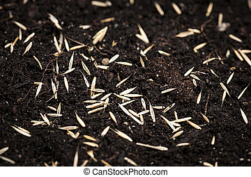 Grass seeds in soil