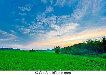 bleu, ciel, clair, vert, frais, herbe