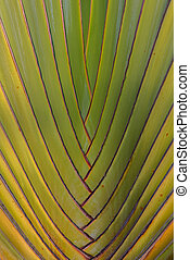 banana leaves - origin of banana leaves