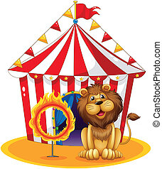 A lion beside a fire hoop at the circus - Illustration of a...