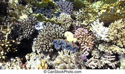Colorful Sponge on Coral Reef - Colorful Sponge on Vibrant...