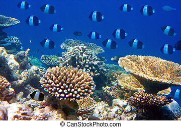 Fishes in corals. Maldives. Indian ocean.