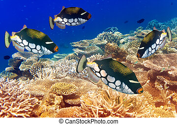 pack of tropical fishes over a coral reef
