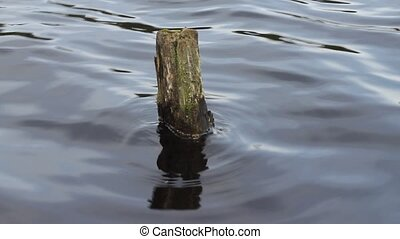 lake snag - snag in the  environmentally friendly lake