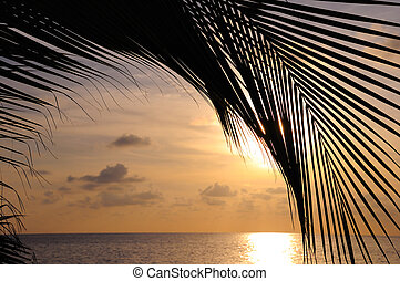 Beach sunset background - Detail of coconut palm tree leaf...