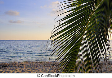 Tropical beach at sunset - Detail of coconut palm tree leaf,...