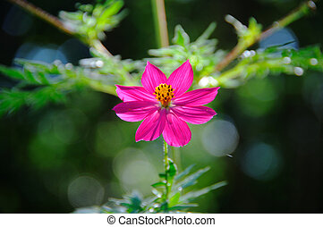 Tropical Wildflower - Detail of tropical pink flower in...