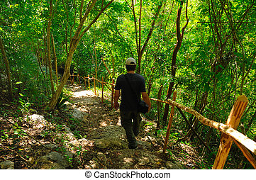 Man walking on forrest trail with green leaves foliage....