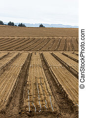 Cultivated Farm Land in Vertical on the California Central...