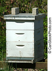 Beehive - A image of a beehive colony